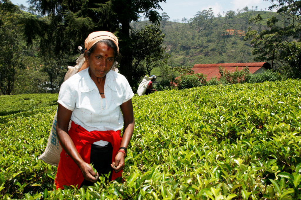 LIBER Srí Lanka 2014-04-19 _MG_6665
