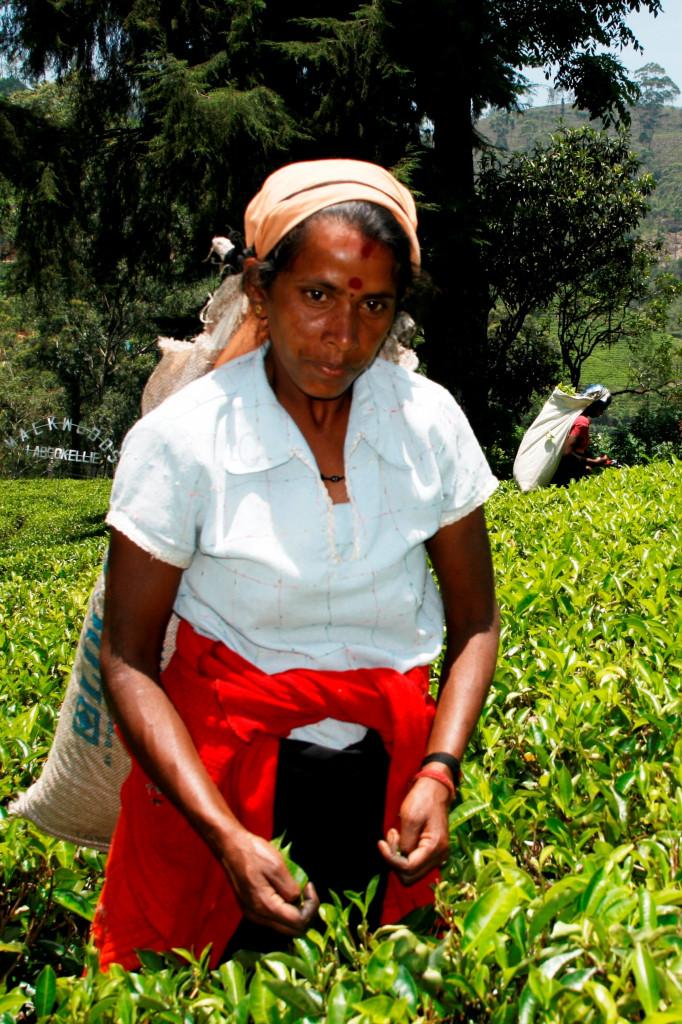 LIBER Srí Lanka 2014-04-19 _MG_6665 výrez