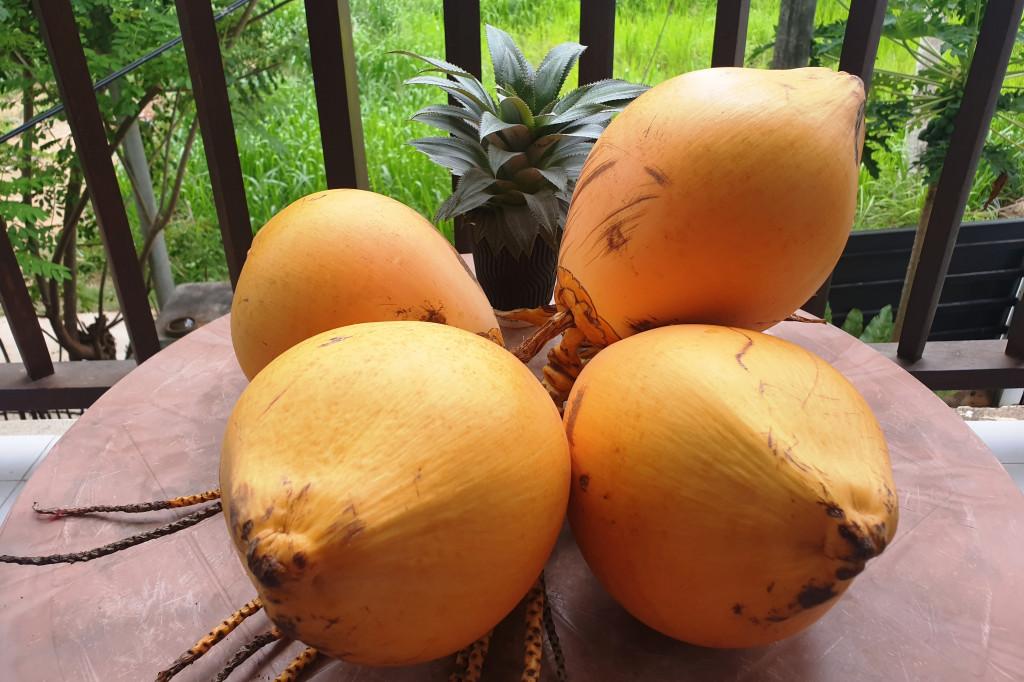 LIBER Srí Lanka Polhena - kokos kráľovský