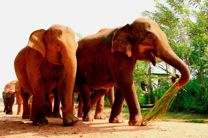 LIBER Srí Lanka jeseň 2012 _MG_6918 - mini