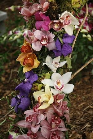 LIBER-orchidea