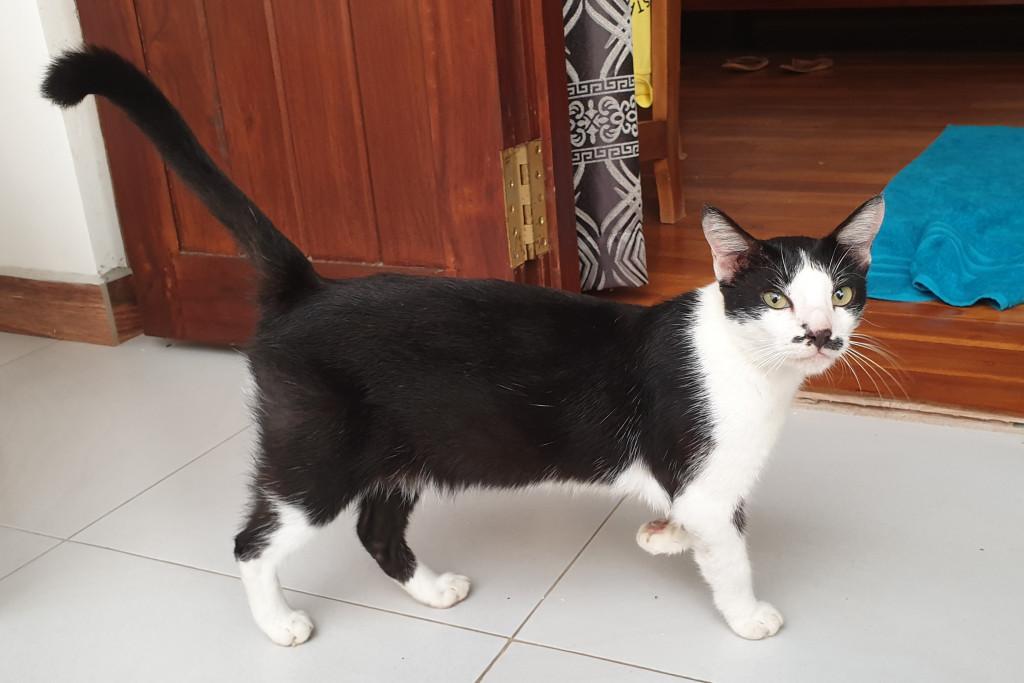 Polhena - mačka Saduda sa vracia