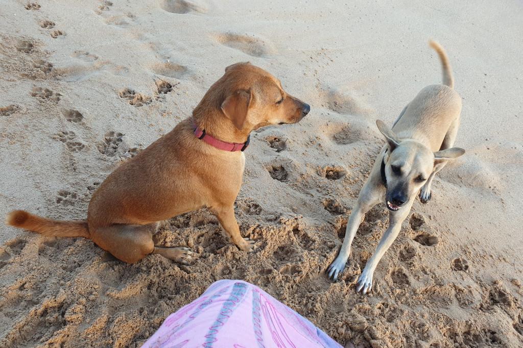 Polhena - plážoví sprievodcovia