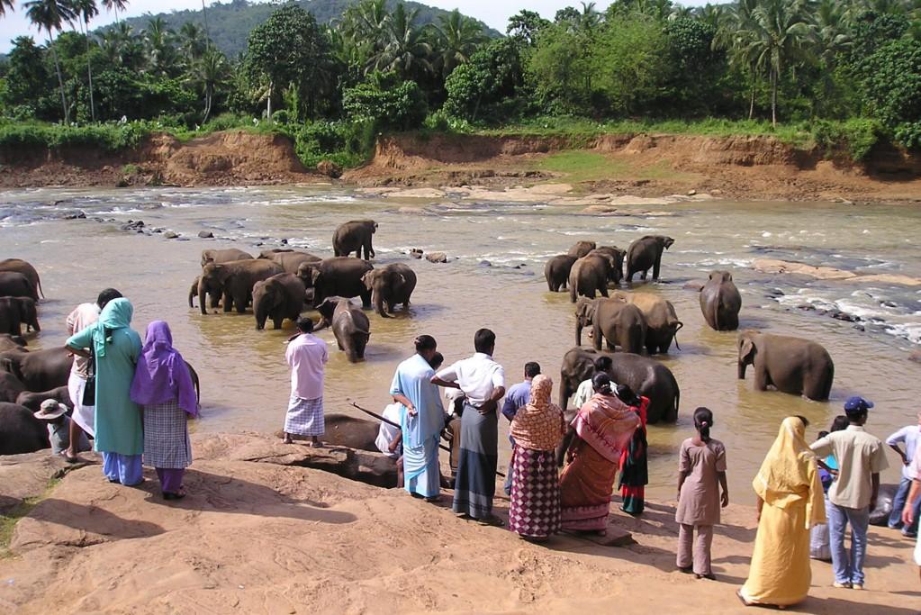 Srí Lanka - Pinnawela rieka a slony (116)